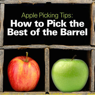 Apple Tips: How to Pick the Best of the Barrel